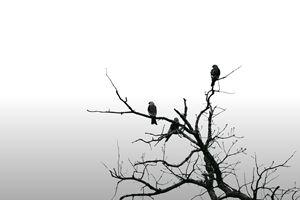 Falcon Family