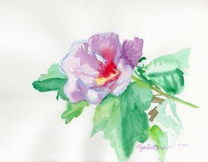 Gentle Rose of Sharon