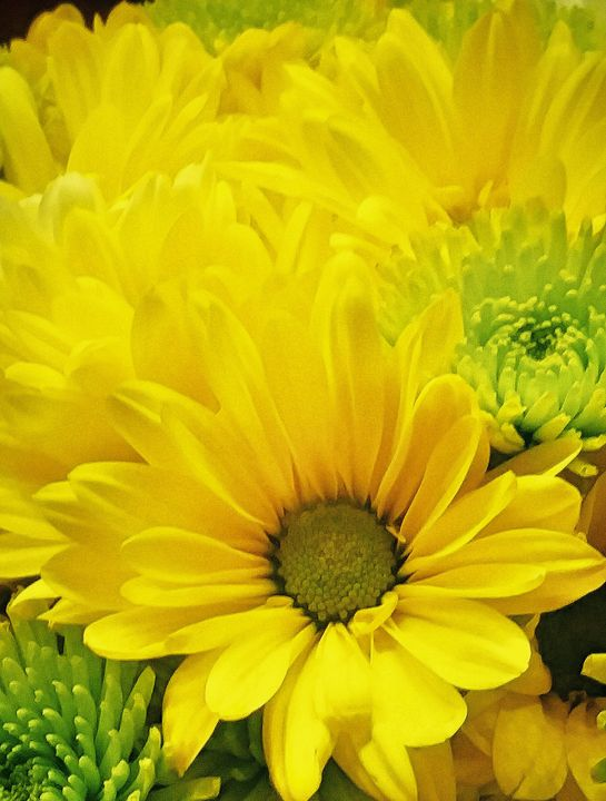 Yellow floral - BeholdersEyes