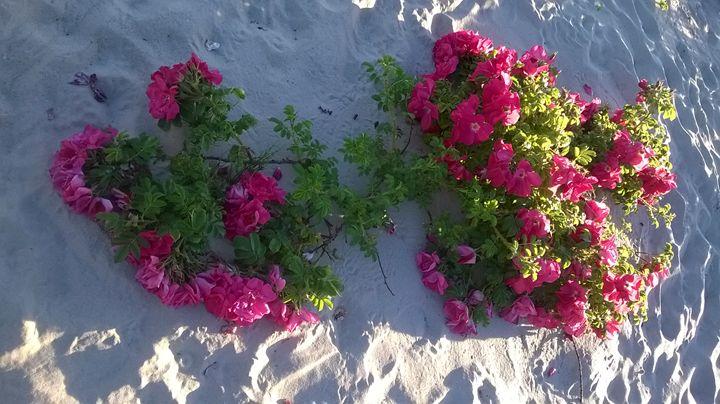 Roses - Pompula