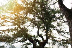 TREE - Patrick Design