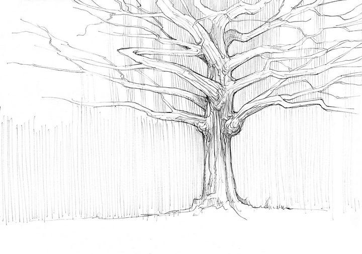 Dead tree - Widok