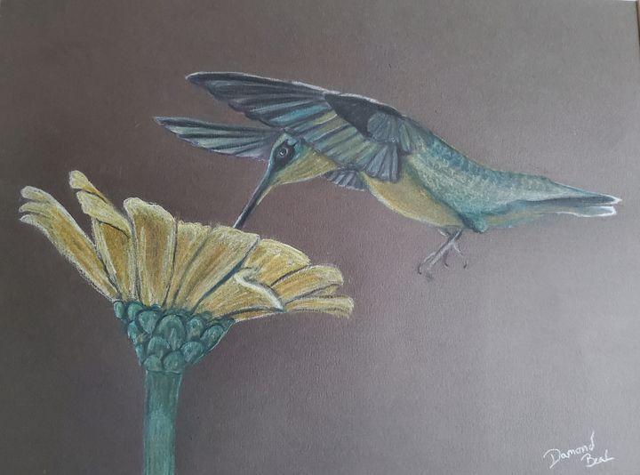 Hummingbird - Damond seth beal