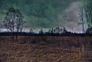 Vintage Marshland