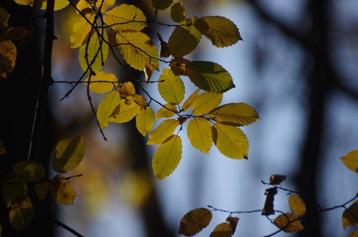 Through the Leaves - Lothar Boris Piltz