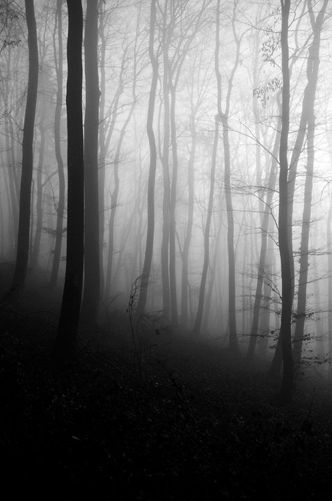 Forest - Lothar Boris Piltz