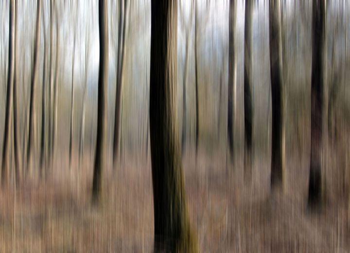 Abstract Trees - Lothar Boris Piltz