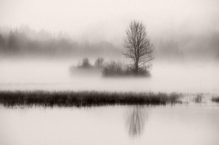 Misty Morning - Lothar Boris Piltz