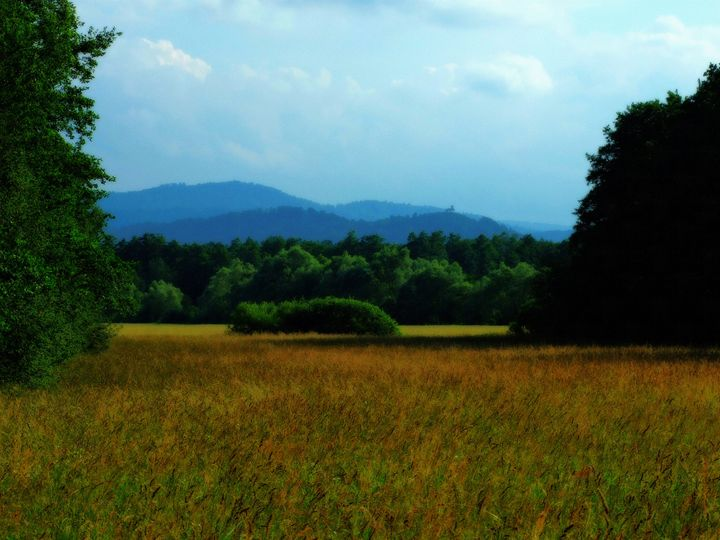 Marshland in Summer - Lothar Boris Piltz