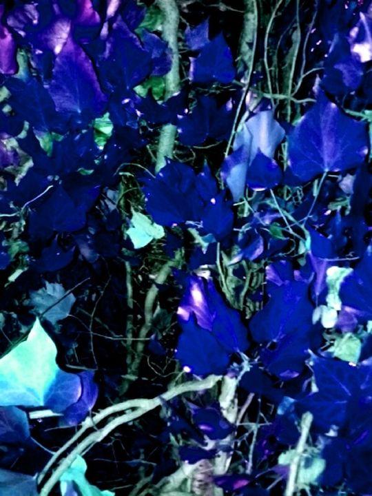 BLUE JAY BLUES - ManneKens Wall Art