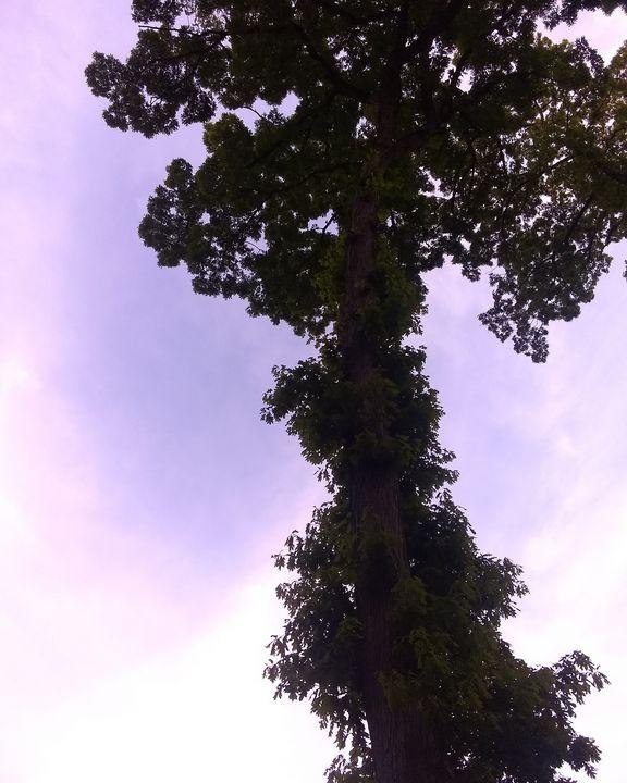Purple skys - Kays