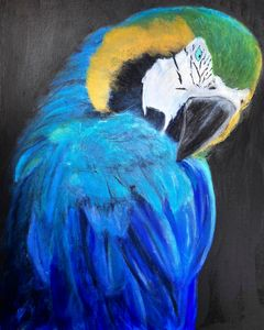 Blue & Yellow Macaw - Scott R Henderson Art