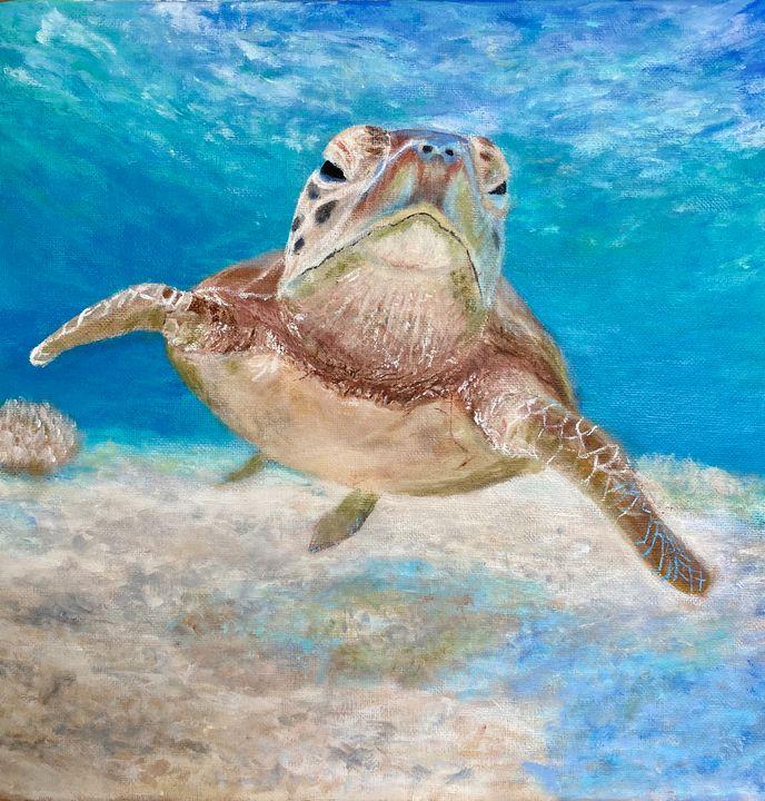 Green Sea Turtle - Scott R Henderson Art