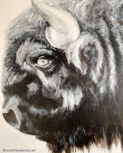 Bison - Scott R Henderson Art