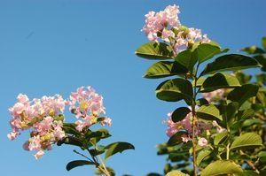 After-school Bloom