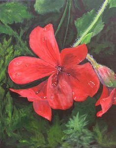 Irish Red Flower