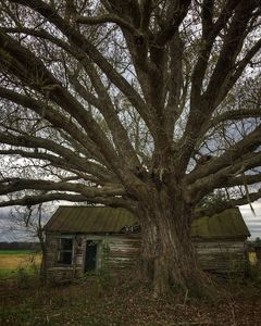 the house with that tree - Mike Wil
