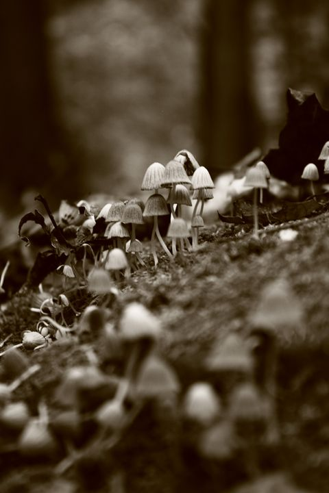 Many mushrooms blAck and white - Beauty For Ashes