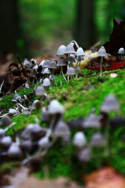 Many mushrooms - Beauty For Ashes