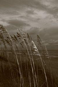 The breeze