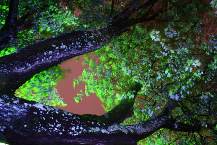 The glowing tree - Beauty For Ashes