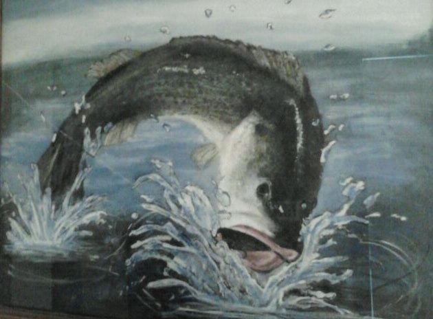 Bass Taking The Bait - D.Middleton Paintings