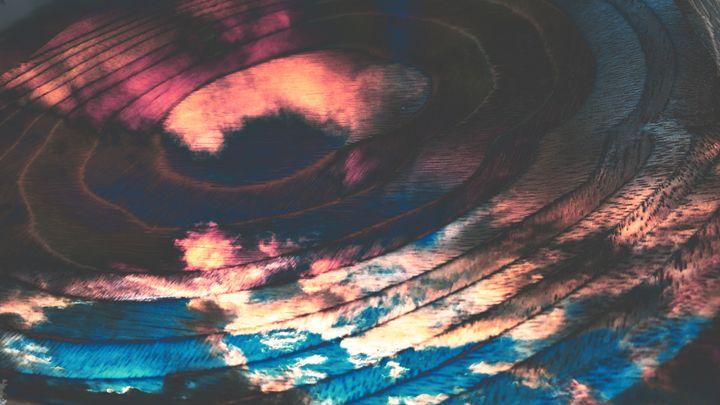 Sky Puddle - Metazoa Art