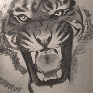 TigerBW