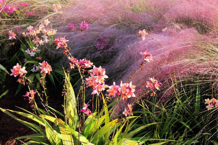 Dance of the Orchids - RosalieScanlonPhotography&Art