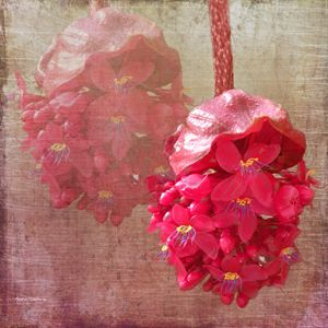 Ruby Colored Orchid - RosalieScanlonPhotography&Art