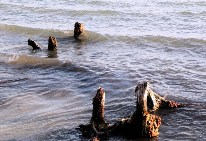 Nature's Beach - RosalieScanlonPhotography&Art