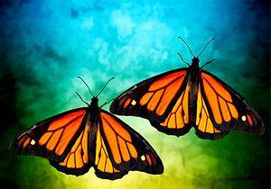 Monarch Butterfly Twins - RosalieScanlonPhotography&Art