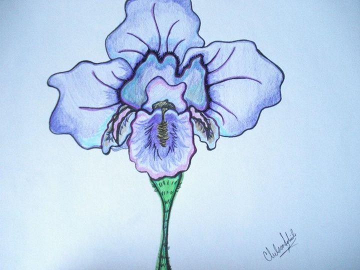 Iris - Chels