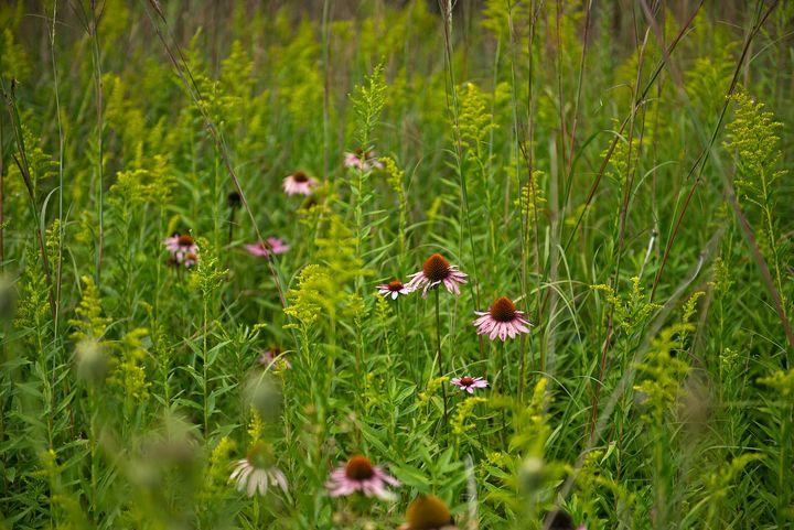Wildflower wonder - Rich