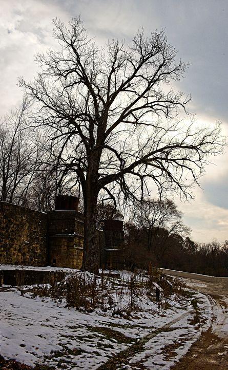 A beautiful tree - Rich