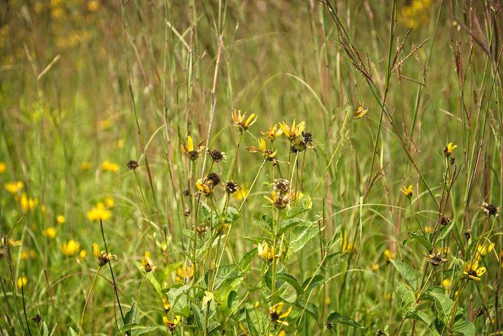 Beautiful Wildflowers - Rich