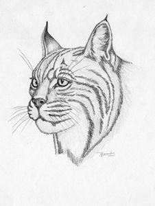 Bobcat - BrandyCraft