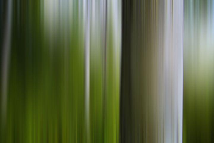 Birch Summer - Stu Gallagher Photography
