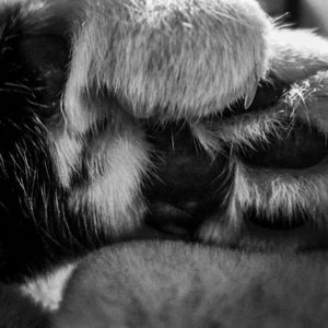 Paw too cutness