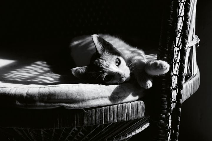 Cat on a chair - JJ Photography