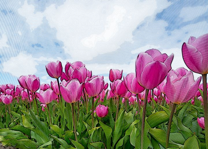 Tulips - GermaneArt