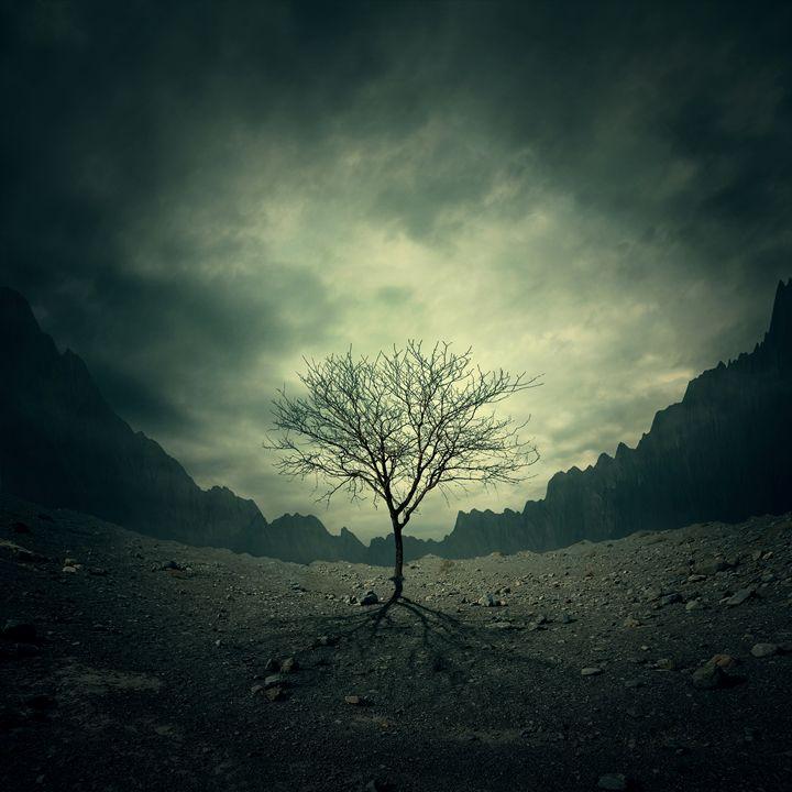 Tree - tothzoli001