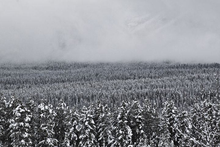 Mountain Fog - Shot by JRTMAC
