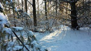 Come Warmth of Winter's Sun