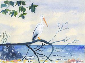 The Pelican Reflects.... - CALIOPE (Cali Norton)