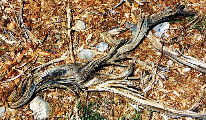 Petrified Wood - Velva Lynn