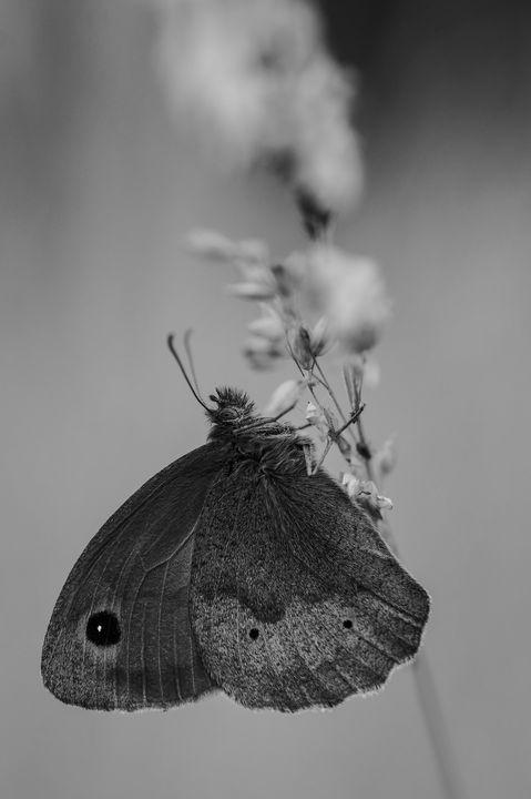 animals.white.photoeyeonline I09 - PhotoEyeOline