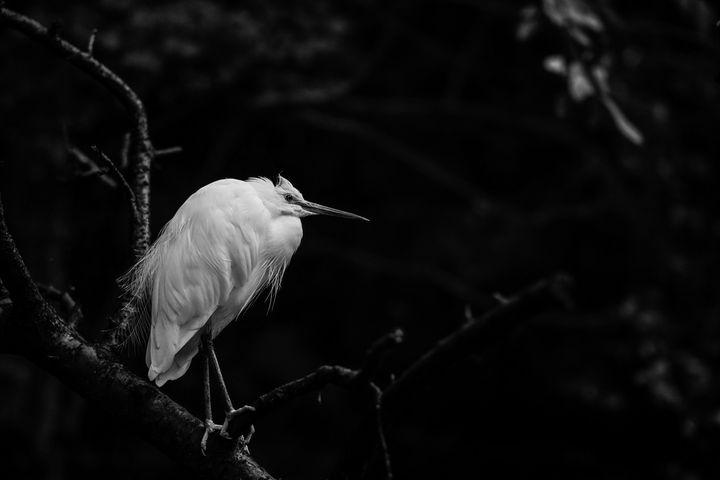 animals.white.photoeyeonline I10 - PhotoEyeOline