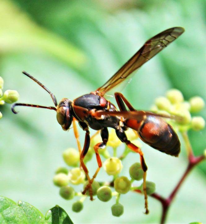 buzzing around - JacPhotography