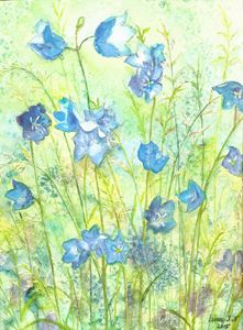 Blue bellflowers - Linn J.N
